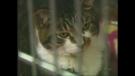 London Humane Society cats