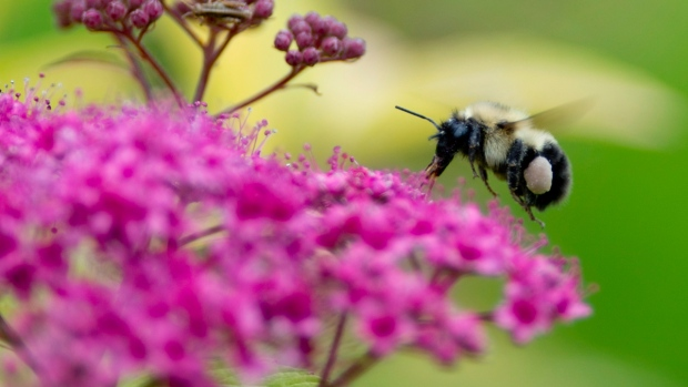 Neonic' pesticides killing bees, harming environment, say