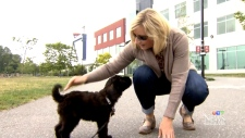 B.C. woman takes mat leave for new dog