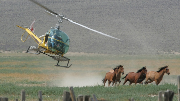 Mustang advocates seek protection for horses