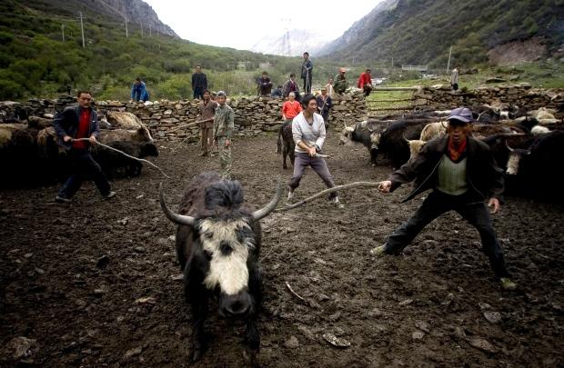 Chinese Tibetan ethnic herdsmen