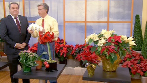 Gardening expert Mark Cullen gives some tips on how to keep your indoor plants healthy and blooming into the New Year.