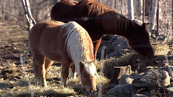 Animal rights group heightens call for ban on horse meat after disturbing video