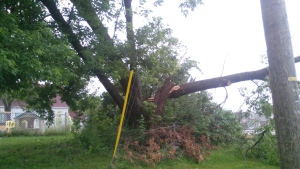 A fallen tree is seen in Dieppe, N.B., Saturday, July 5, 2014. (Leonard Niles / MyNews)
