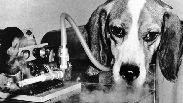 A Beagles Diet Second-hand smoke as h...