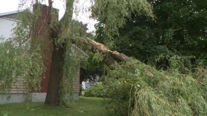 Thousands of trees have been lost since post-tropical storm Arthur made landfall in the Maritimes on July 5.