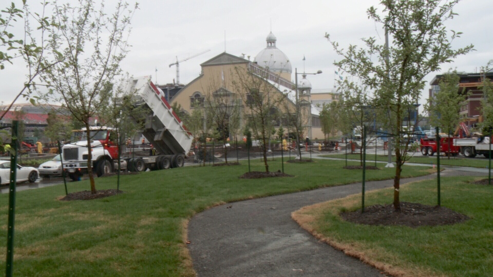 An apple tree orchard makes up part of the new green space at Lansdowne Park, July 15, 2014