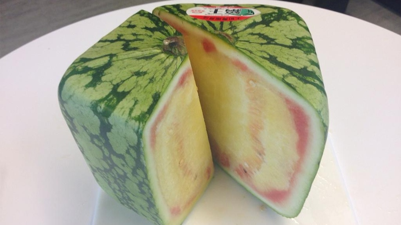 CTV News staff members tasted one of the square watermelons and were unimpressed.