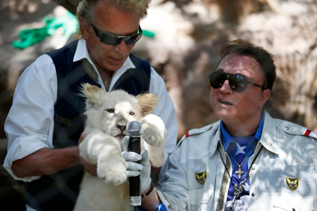 Siegfried and Roy welcome lion cubs to habitat