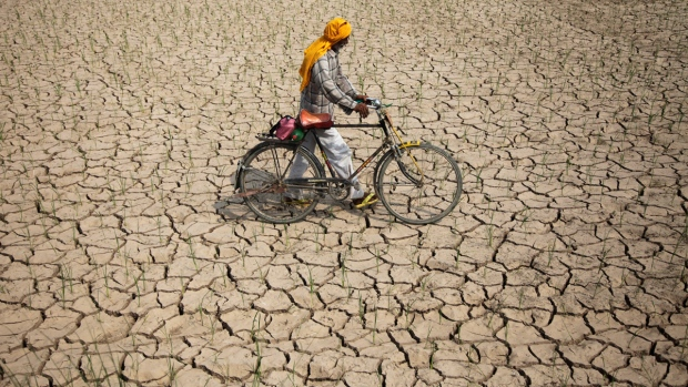 Parched paddy field in Ranbir Singh Pura, India