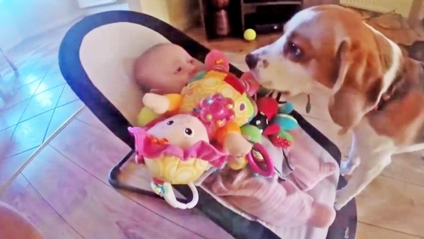Dog steals toy from baby then apologizes