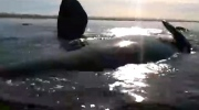 Canada AM: Kayakers encounter whale