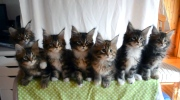Canada AM: Seven kittens move in unison