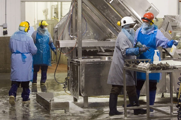 Maple Leaf Foods workers clad in protective clothing clean equipment on the food processing lines at the facility in Toronto on Thursday August 21, 2008. (Frank Gunn / THE CANADIAN PRESS)