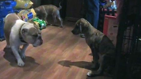 paws r us adoption, quebec puppy mill