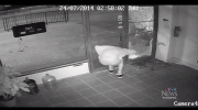 Startled thief runs headfirst into door