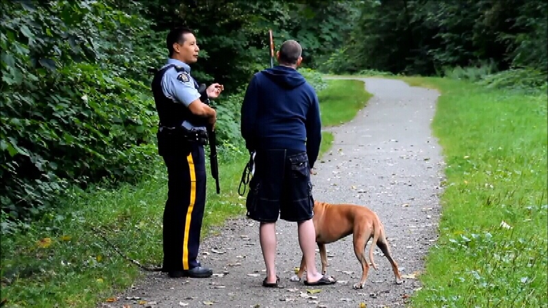 Officers searching for a bear spotted near Gates Park in Port Coquitlam Thursday night.