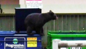 CTV Vancouver: Wounded bear shot dead in park