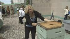 Laureen Harper stung by bees