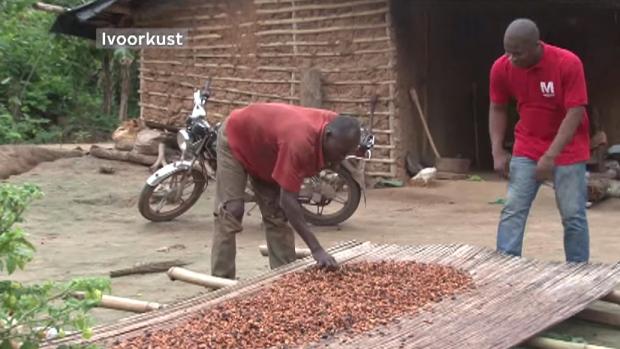 Ivory coast cocoa bean farmer Alfonse