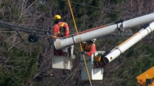 Toronto Hydro contractor workers. (file)