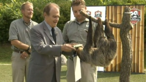 Bob the sloth examines a scroll awarded to him by Deputy Mayor Norm Kelly at the Toronto Zoo on Thursday, July 31, 2014.