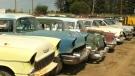 CTV Edmonton: Man selling hundreds of cars