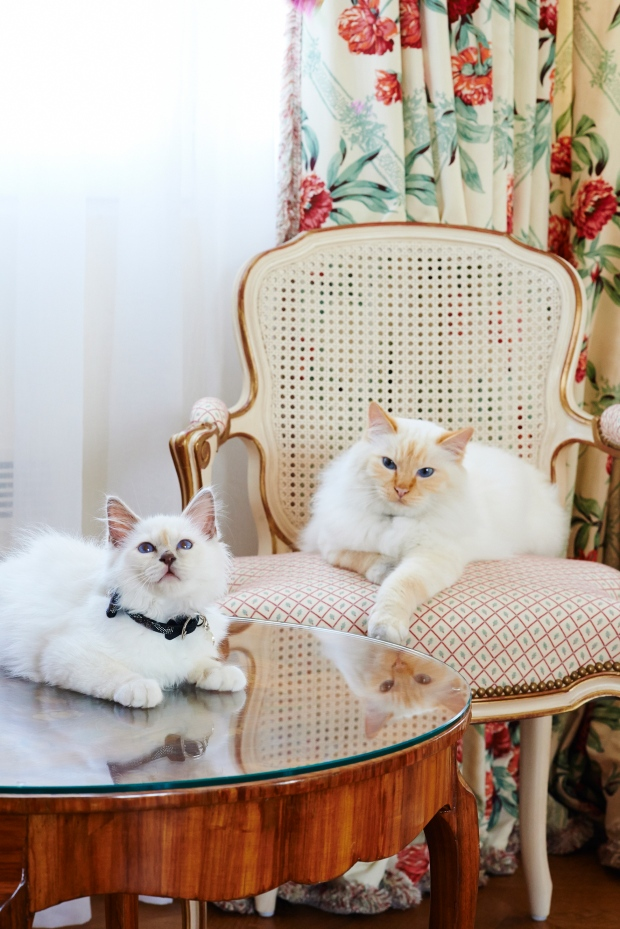 Cat Cafe Bristol
