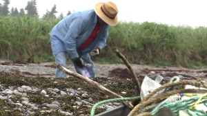 CTV Atlantic: Garbage and seaweed makes a mess
