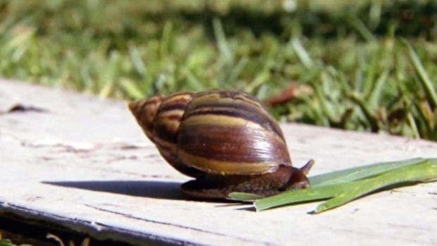 Slugs Snails Bugs And Beetles How To Get Them Out Of Your Garden