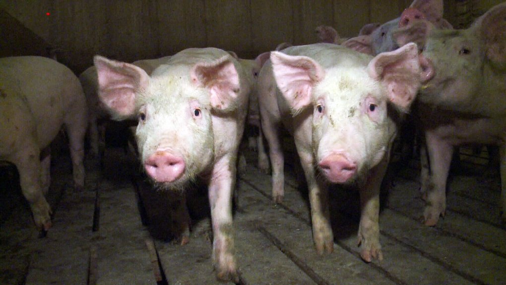 August 7: Russia slaps sanctions on Canadian pork