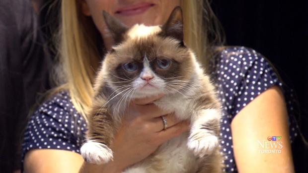 CTV Toronto: Grumpy Cat comes to Toronto