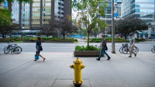 Toronto Cash Cow Fire Hydrant