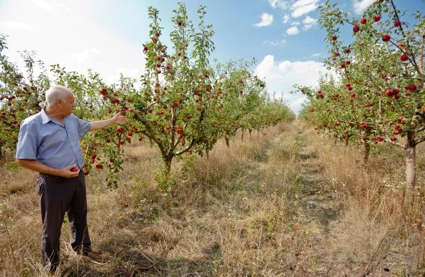 Moldovan farmer Sergiu Calmac