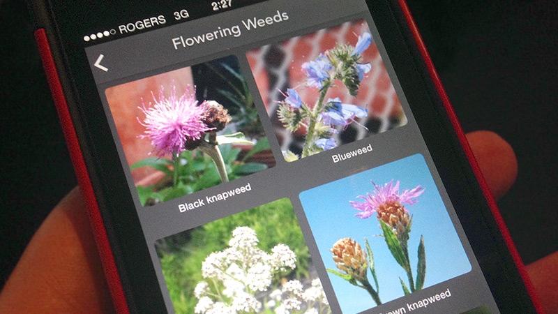 Alberta Weed Spotter App
