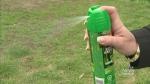 CTV Edmonton: When mosquitoes attack…