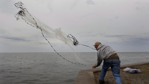 Sam Henry, 26, hoists his net while fishing for sheep head on the sea wall at Northshore Park, Wednesday, Jan. 11, 2012 in St. Petersburg, Fla. (AP Photo/Tampa Bay Times, Dirk Shadd)