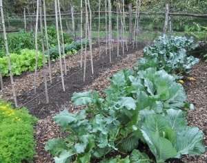 A garden with cabbage and other seasonal greens in New Paltz, N.Y. is seen in this undated image. (AP / Lee Reich)
