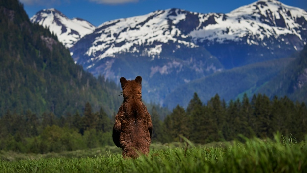 Grizzly Bear Sanctuary in B.C.