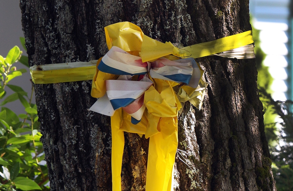 A yellow ribbon is tied to a tree outside the family home of freelance journalist James Foley on Wednesday, Aug. 20, 2014 in Rochester, N.H. (AP / Jim Cole)
