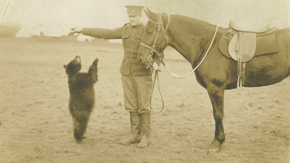 Harry Colebourn, a Canadian soldier and veterinarian purchased a bear cub in White River, Ont., and named it Winnie after his hometown of Winnipeg.