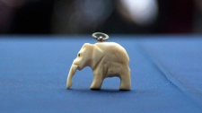 A small ivory elephant, which was placed inside a time capsule and hidden in the Maple Leaf Gardens building on Sept. 21, 1931, is seen in Toronto on Thursday, Jan. 26, 2012. The meaning of the elephant is unknown. (Pawel Dwulit / THE CANADIAN PRA small ivory elephant, which was placed inside a time capsule and hidden in the Maple Leaf Gardens building on Sept. 21, 1931, is seen in Toronto on Thursday, Jan. 26, 2012. The meaning of the elephant is unknown. (Pawel Dwulit / THE CANADIAN PA small ivory elephant, which was placed inside a time capsule and hidden in the Maple Leaf Gardens building on Sept. 21, 1931, is seen in Toronto on Thursday, Jan. 26, 2012. The meaning of the elephant is unknown. (Pawel Dwulit / THE CANADIAN PRESS)RESS)ESS)