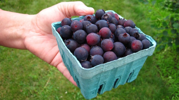 Juneberries in high demand