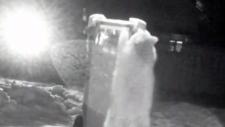 Raccoon-resistant green bin
