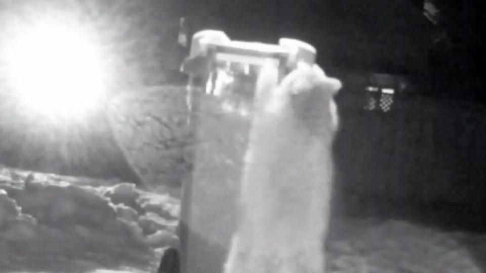 A raccoon tries to break into a green bin designed by Simon Treadwel in Toronto.