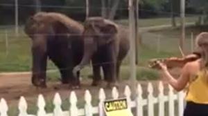 Violin elephants