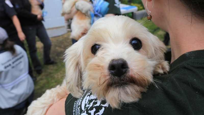 Mom and daughter puppy mill operators handed 20-year animal