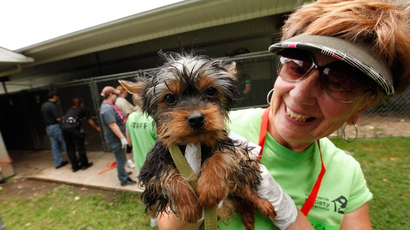 A volunteer with the Humane Society of Charlotte holds a dog rescued from a suspected puppy mill operation in Rutherford County, NC. (Associated Press)