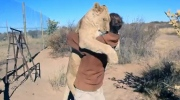 Lion whisperer? Man enjoys hug from giant feline f