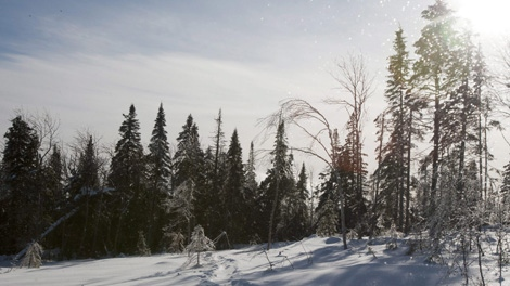 Canadian forest